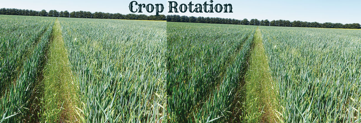 Crop Rotation System: A Productive and Sustainable System for Food Crops in Kenya